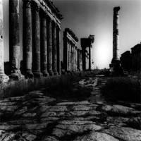 Aphanea-2001